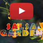 The first OFFICIAL MUSIC VIDEO<em> My Salsa Garden</em>