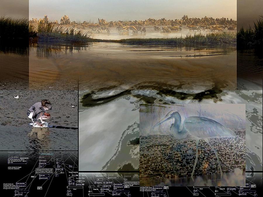 salt-marsh-suite-image