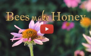 <strong>Bees Make Honey</strong><br>OFFICIAL MUSIC VIDEO